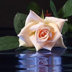 """фото """"С прздником цветы нашей жизни!"""""""