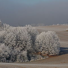 """фото """"Sweet home Sachsen-Anhalt"""""""