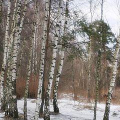 """фото """"Март в Рублевском лесу"""""""