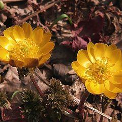 """фото """"Весна пришла"""""""