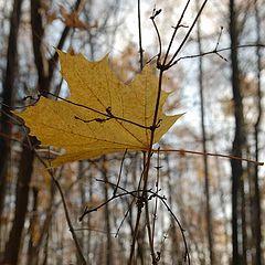 """фото """"Осень. Одиночество"""""""