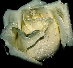 "фото ""For you, my dear Friend, Larisa Leonova..."""