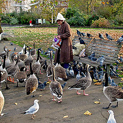 "photo ""Old lady and the birds"""