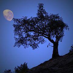 """фото """"Tree moon"""""""