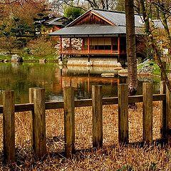 """фото """"Japenase garden Hasselt Belgium"""""""