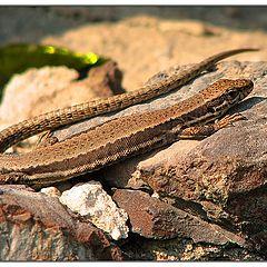 """photo """"lizard"""""""