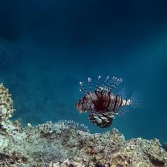"""фото """"На краю рифа"""""""