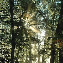 """фото """"Утро в лесу..."""""""