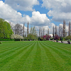 "фото ""The Lawn"""