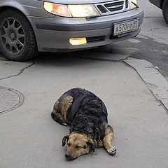 """photo """"Life of stray dogs in capital."""""""