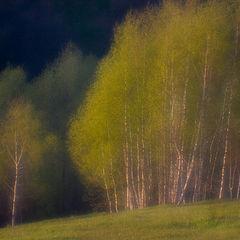 """фото """"Весна через монокль"""""""