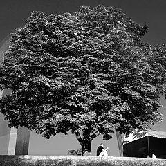 """photo """"Думы под деревом"""""""