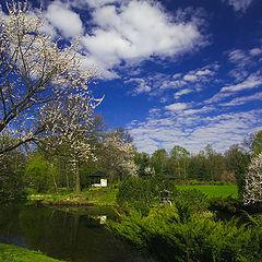 """фото """"Весны цветенье"""""""