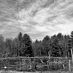 """photo """"Swampland"""""""