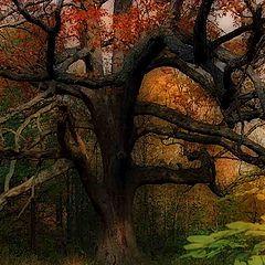 "photo ""The Hanging Tree"""