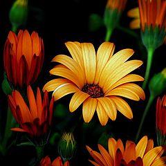 "photo ""sunny flower"""