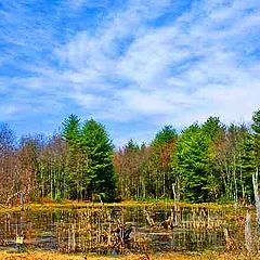 """photo """"Swampland in color."""""""