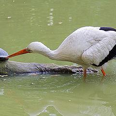 "photo ""Tastiest piece of turtle is leg!"""