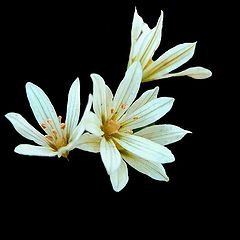 "фото ""Цветы весенние"""