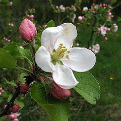 """фото """"весна....наступает"""""""