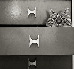 """фото """"Cat in a drawer"""""""