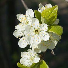 """фотоальбом """"весна, 2008"""""""