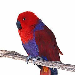 "photo ""Pretty Bird."""
