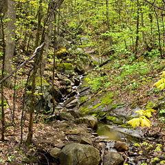 "photo ""Forest Stream"""
