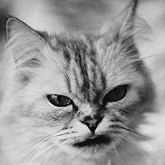 """album """"Animals"""""""