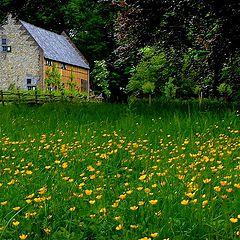 "photo ""farmhouse between flowers"""