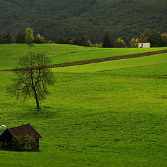 "photo ""green landscape"""