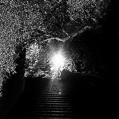 """фото """"Hочной лестница"""""""