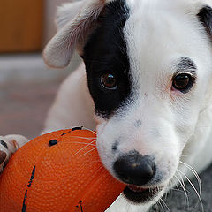 """photo """"Don't touch my ball..."""""""