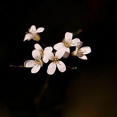 """фото """"Цветы лесные"""""""