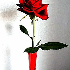 """фото """"красная роза..."""""""