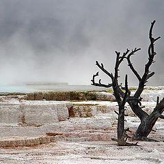 """photo """"Mammoth Springs"""""""