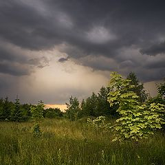 "photo ""Before the rain"""