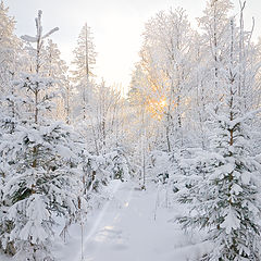 "фото ""Лучики в морозном лесу"""