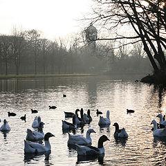 "photo ""Goose's tales"""