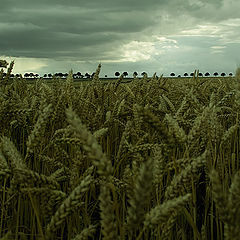 "photo ""... catcher in the wheat"""