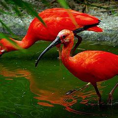 "photo ""colorfull birds"""