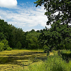 """photo """"The old pond"""""""