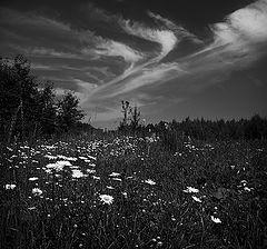 """фото """"Ромашки и облака..."""""""
