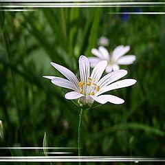 """фото """"лесной цветок..."""""""