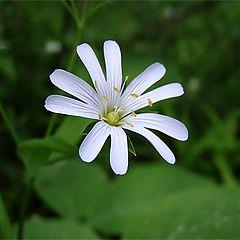 """фото """"еще такой цветок..."""""""