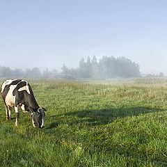 "photo ""Morning cows :)"""
