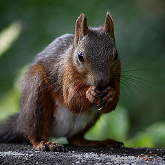 "photo ""Where are my nuts?"""