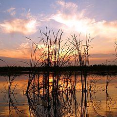 """фото """"Вечер на пруду"""""""