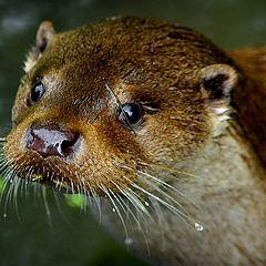 "photo ""wet nose"""