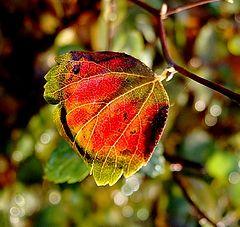 """photo """"autumn feeling"""""""